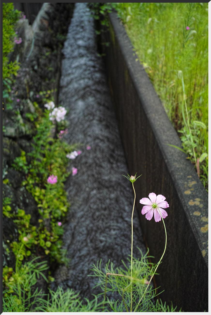yakko_140810_08.jpg